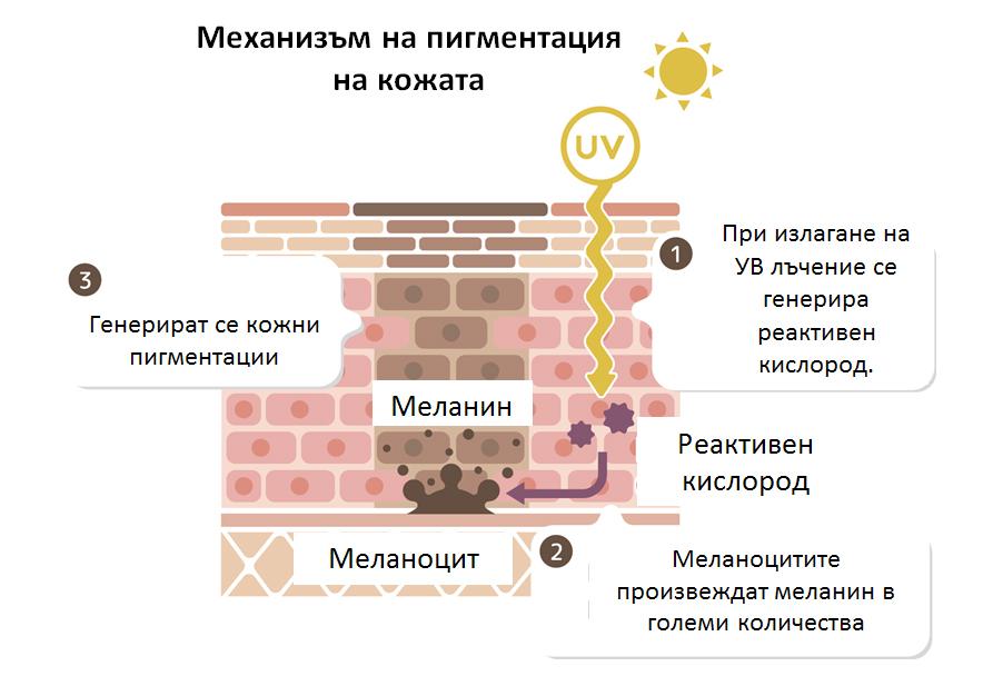skin-pigmentation-mechanism-bg.jpg